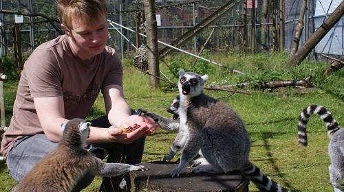 feeding the lemurs copy copy