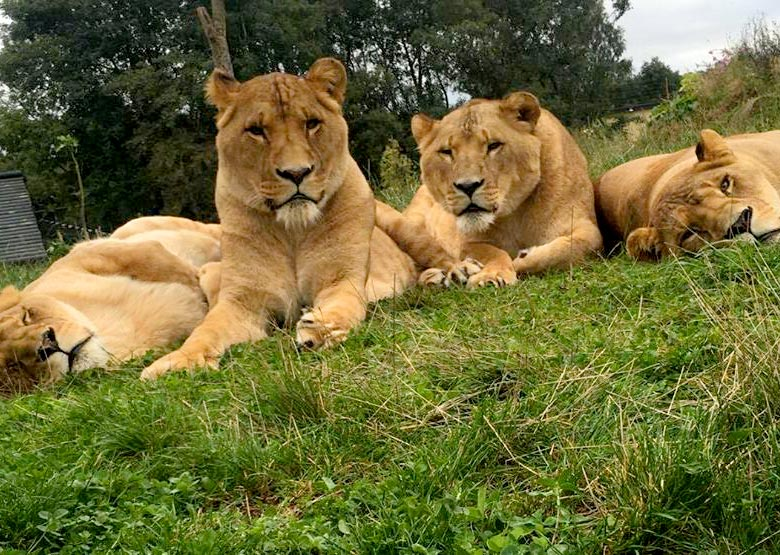 Five Sisters Zoo | Get Up Close and Personal At West