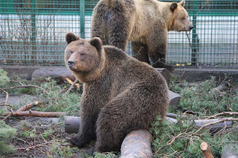 New Rescue Bears - Five Sisters Zoo