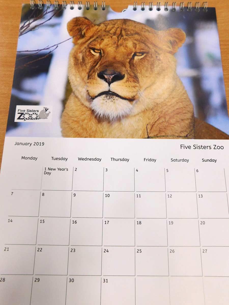 Zoo Calendar : Zoo calendar now on sale five sisters