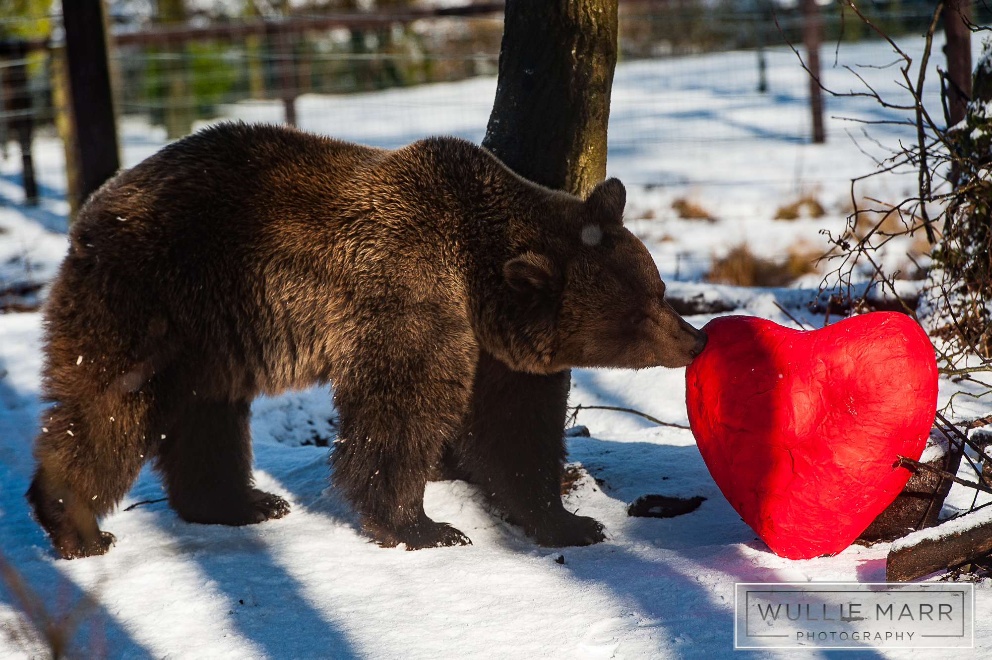 Valentine's Day at Five Sisters Zoo