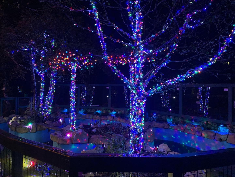FSZ Autumn Nights & Zoo Christmas Illuminations